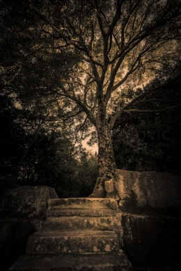 Stories of trees