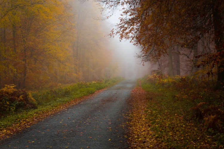 Sonate d'automne