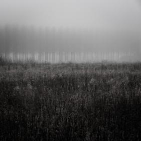 Forêts enchantées